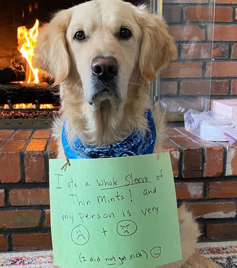 Dog ate Thin Mints