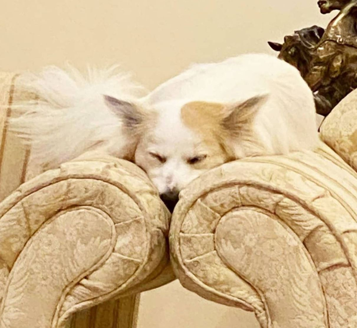 Sleeping dog on a couch
