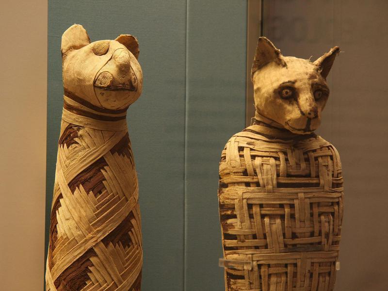 Mummified Pets