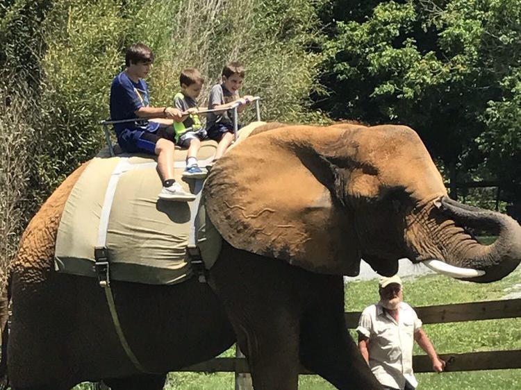 Children riding an elephant