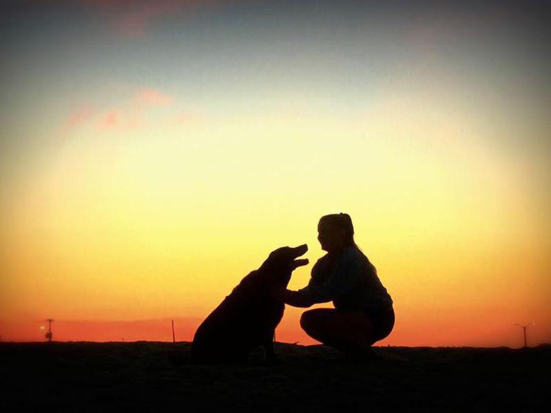 Silhouette of dog and owner at sunset