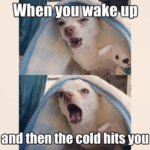 Cold morning mist meme