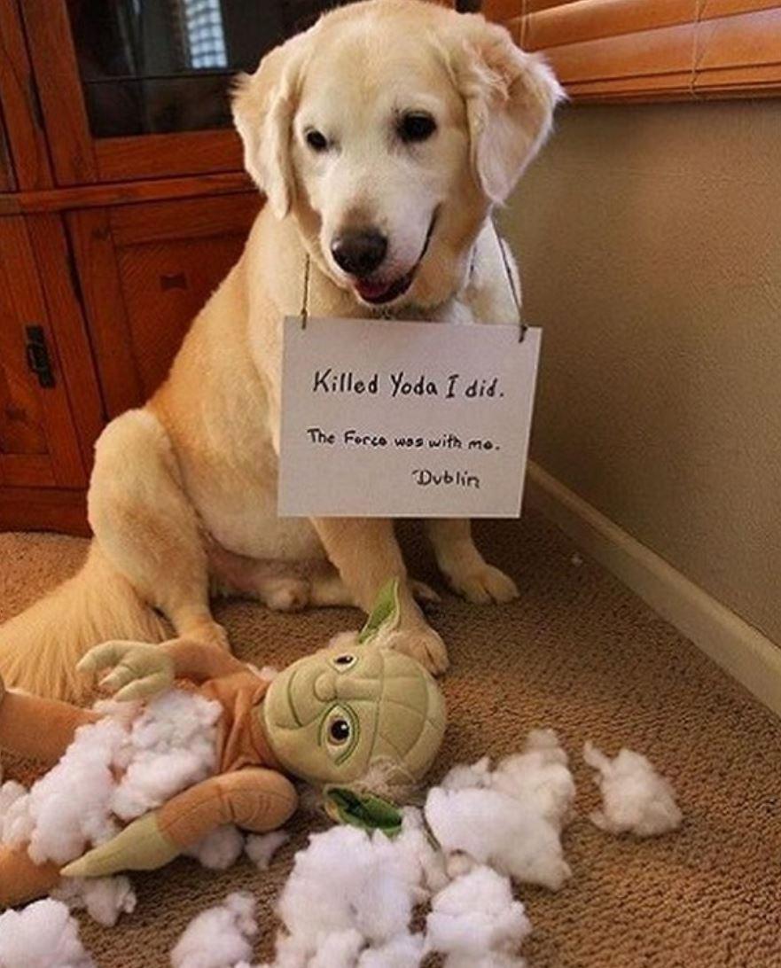 Dog killed Yoda