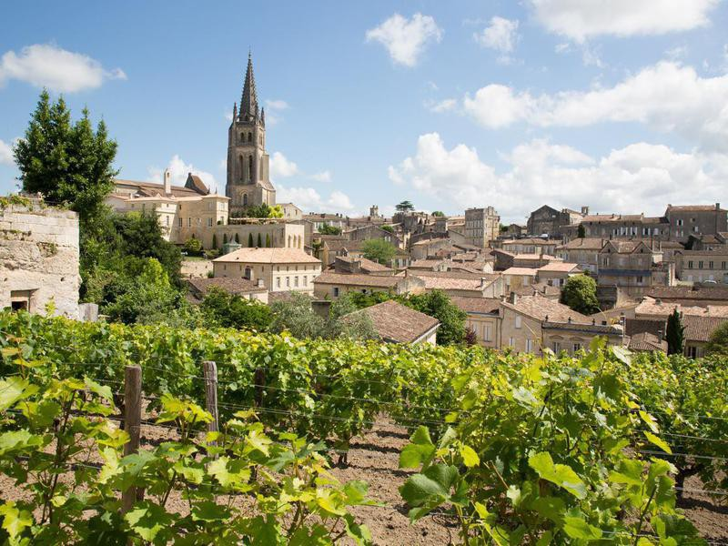 Vineyards at Saint Emilion, Bordeaux, France