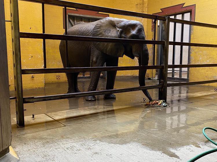 Elephant on concrete floor