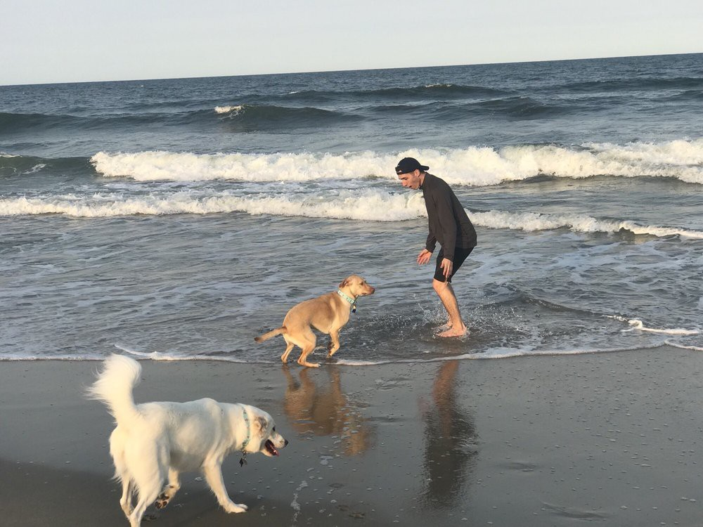 Dogs playing in the water at dog beach