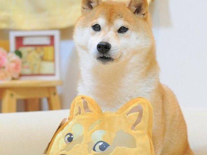 Doge dog Kabosu