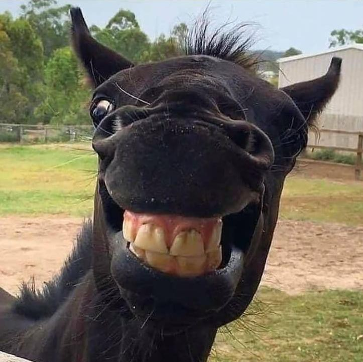 Horse Smiling Goofily