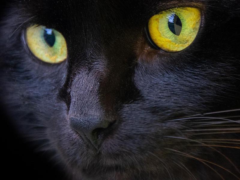 'Louie' Boy Cat Name