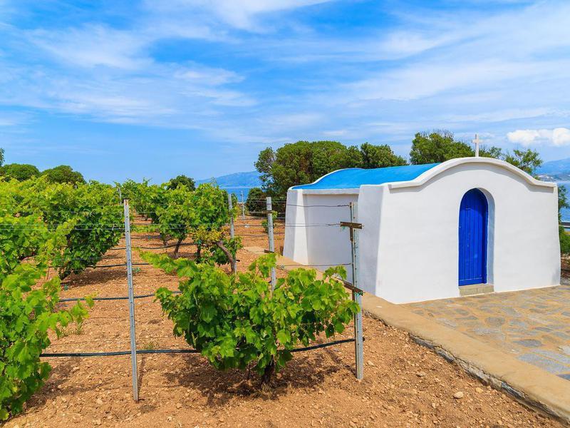 Vineyard in Paros island, Greece
