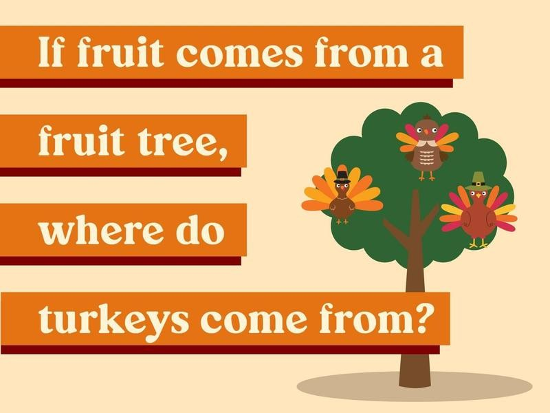 If fruit comes from a fruit tree, where do turkeys come from?