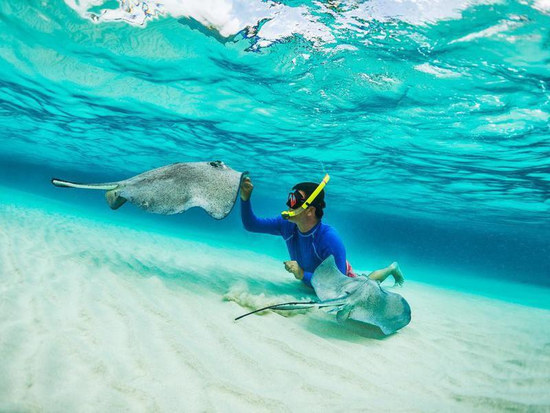 Snorkeler playing with stingrays