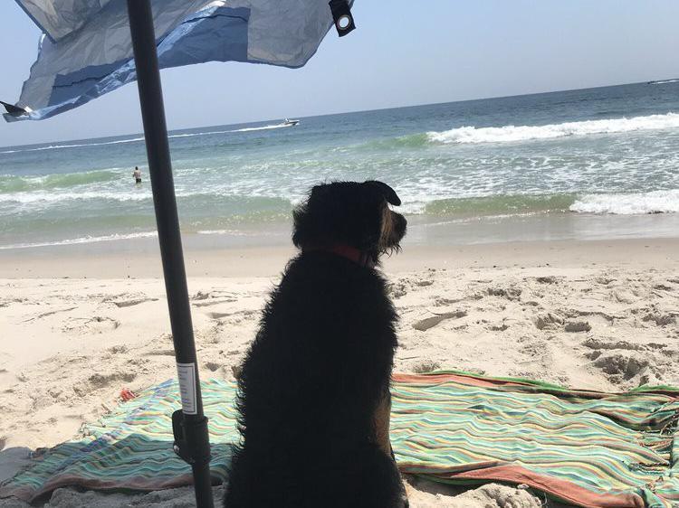 Dog relaxing under beach umbrella