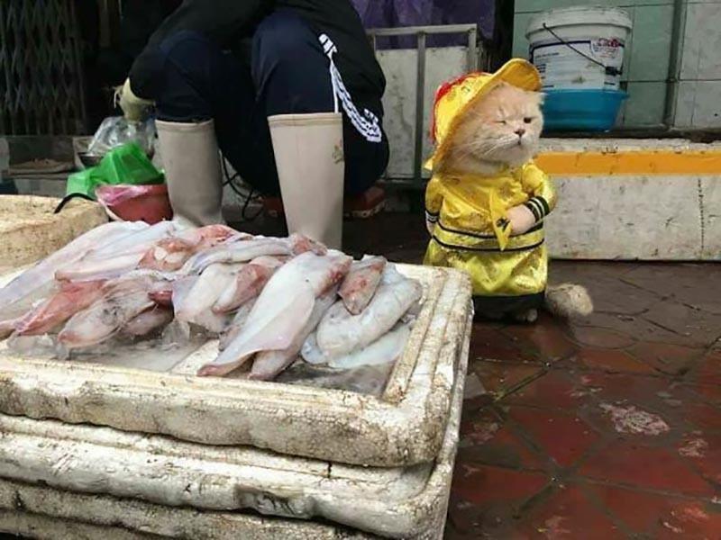 Chó the Cat