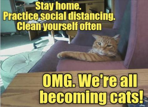 Cat epiphany