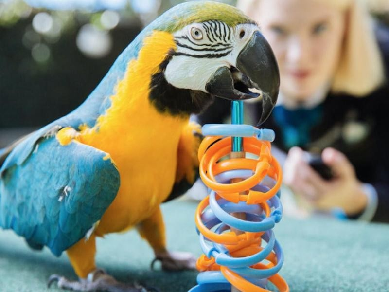 The Most Rings Placed on a Target by a Macaw in 1 Minute