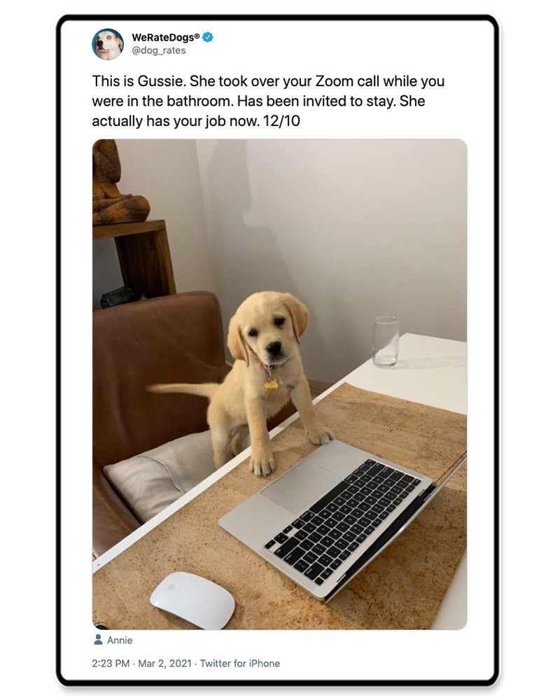 Puppy with a laptop