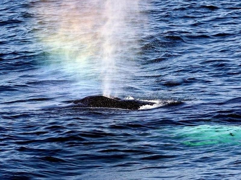 Whale in Bar Harbor, Maine