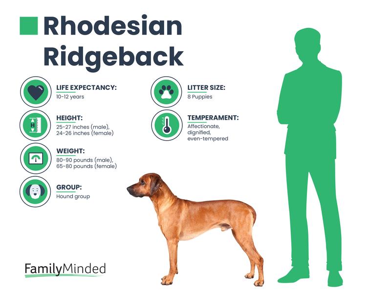 Ridgeback breed info