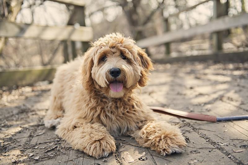 mixed dog breeds