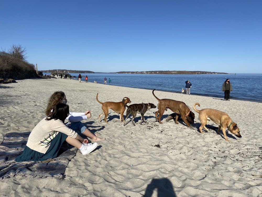 Dogs playing in the sand at dog friendly beach