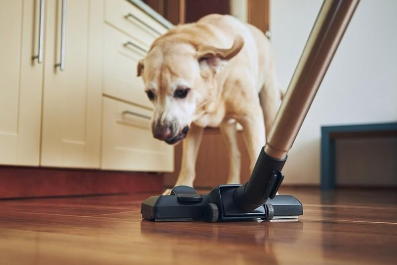 fear of vacuums