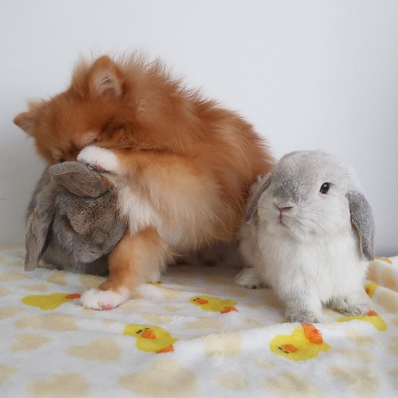 Dog and two rabbits