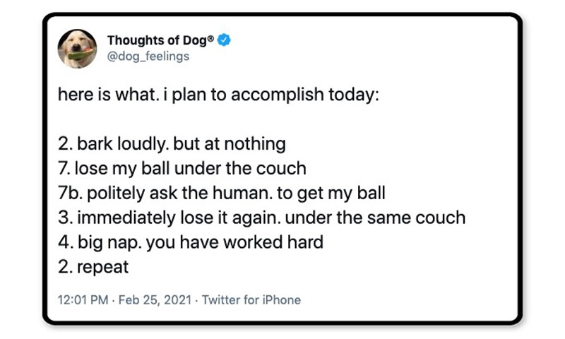 Dog plan for the day