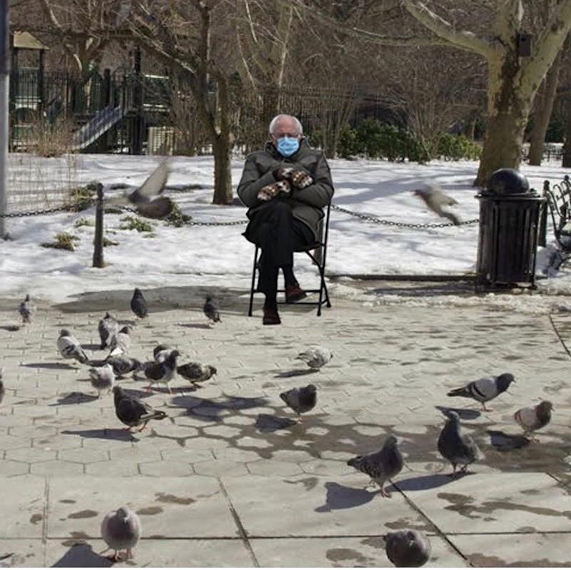 Bernie Sanders and pigeons