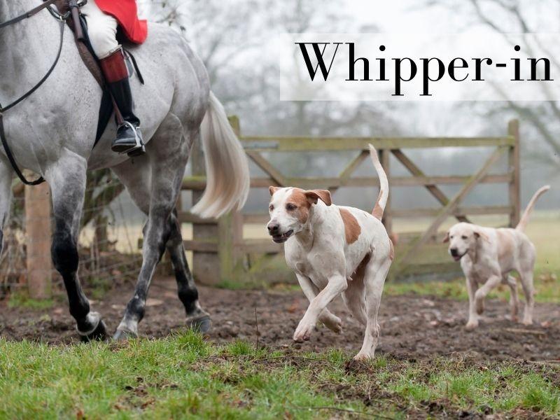 Whipper-in