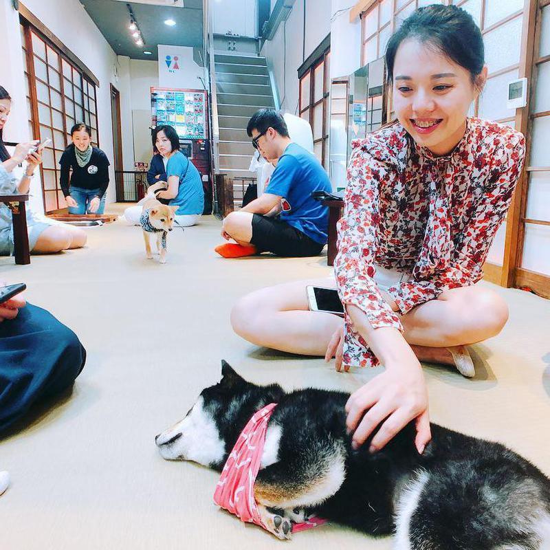 Shiba Inu cafe
