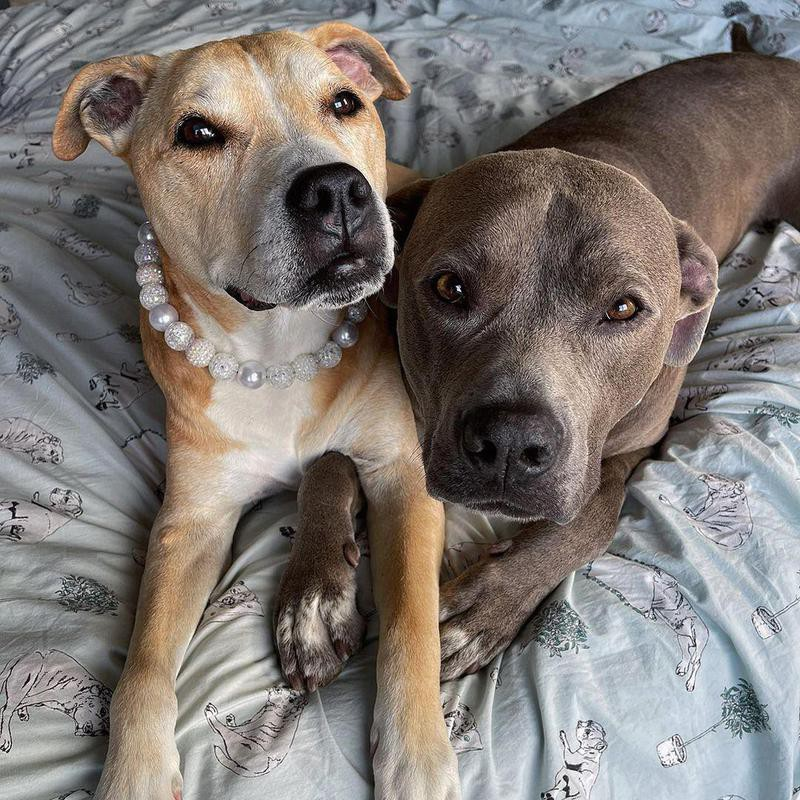 two dogs on bed