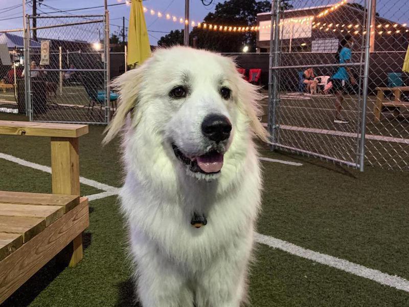 Doggos Dog Park & Pub