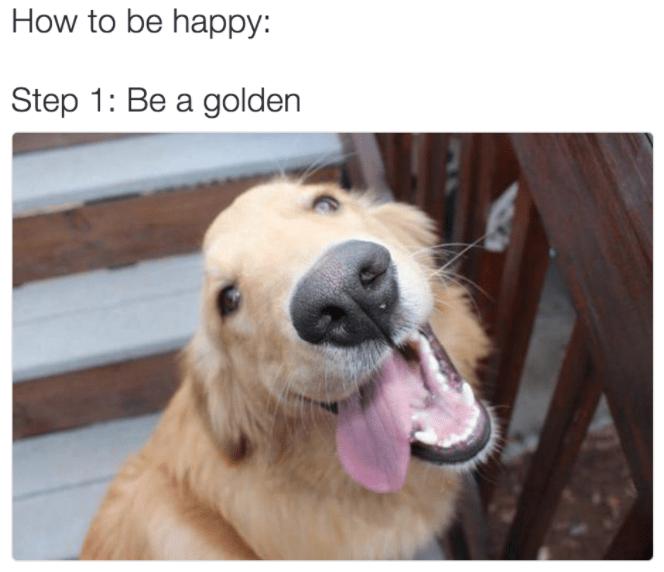 Golden retriever following the golden rule
