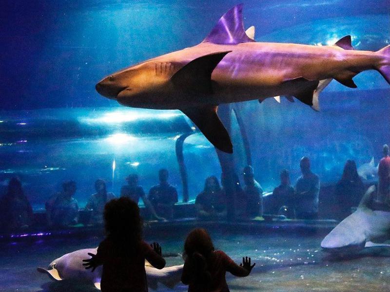 Oklahoma Aquarium Bull Shark