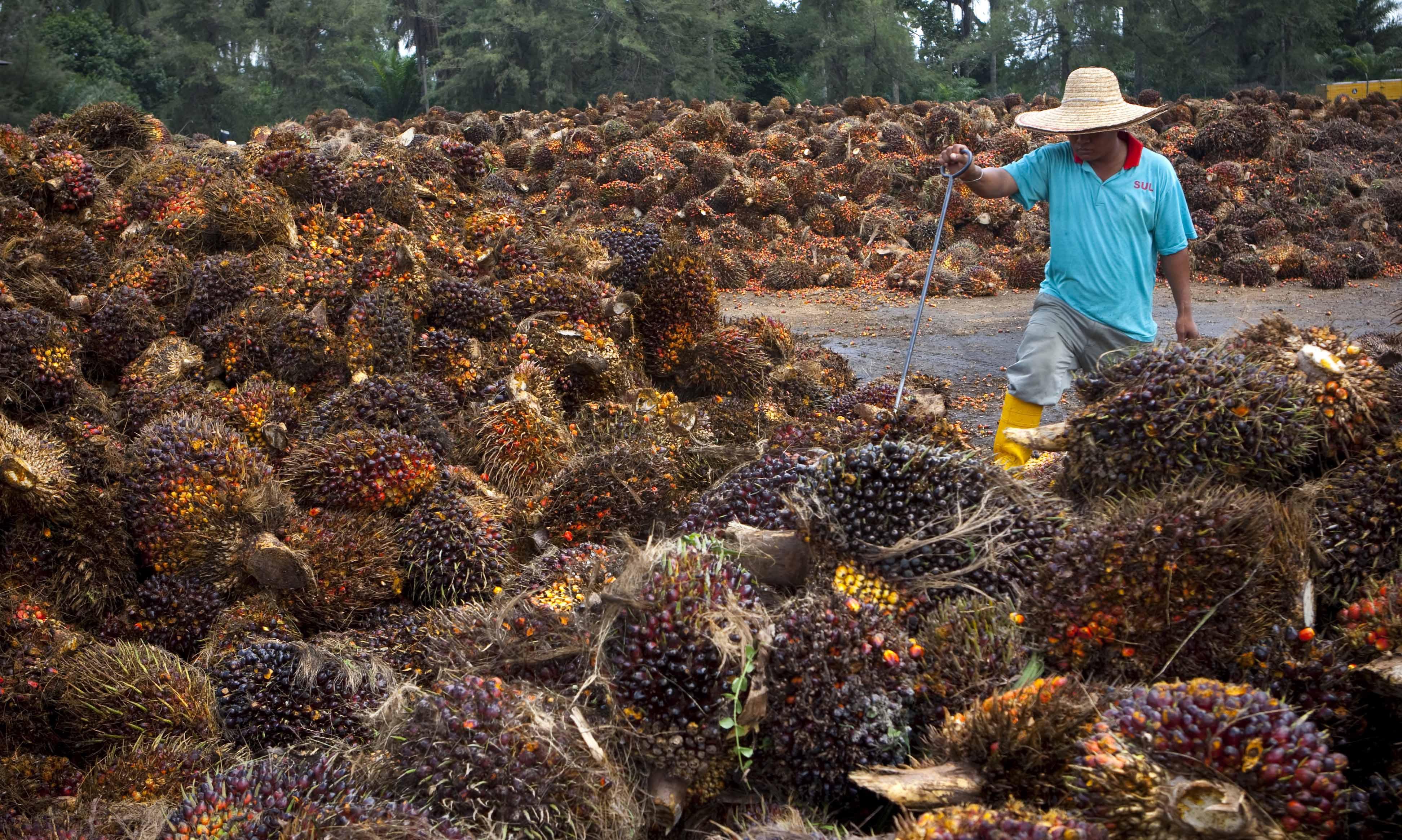 Oil palm fruits in Kuala Lumpur