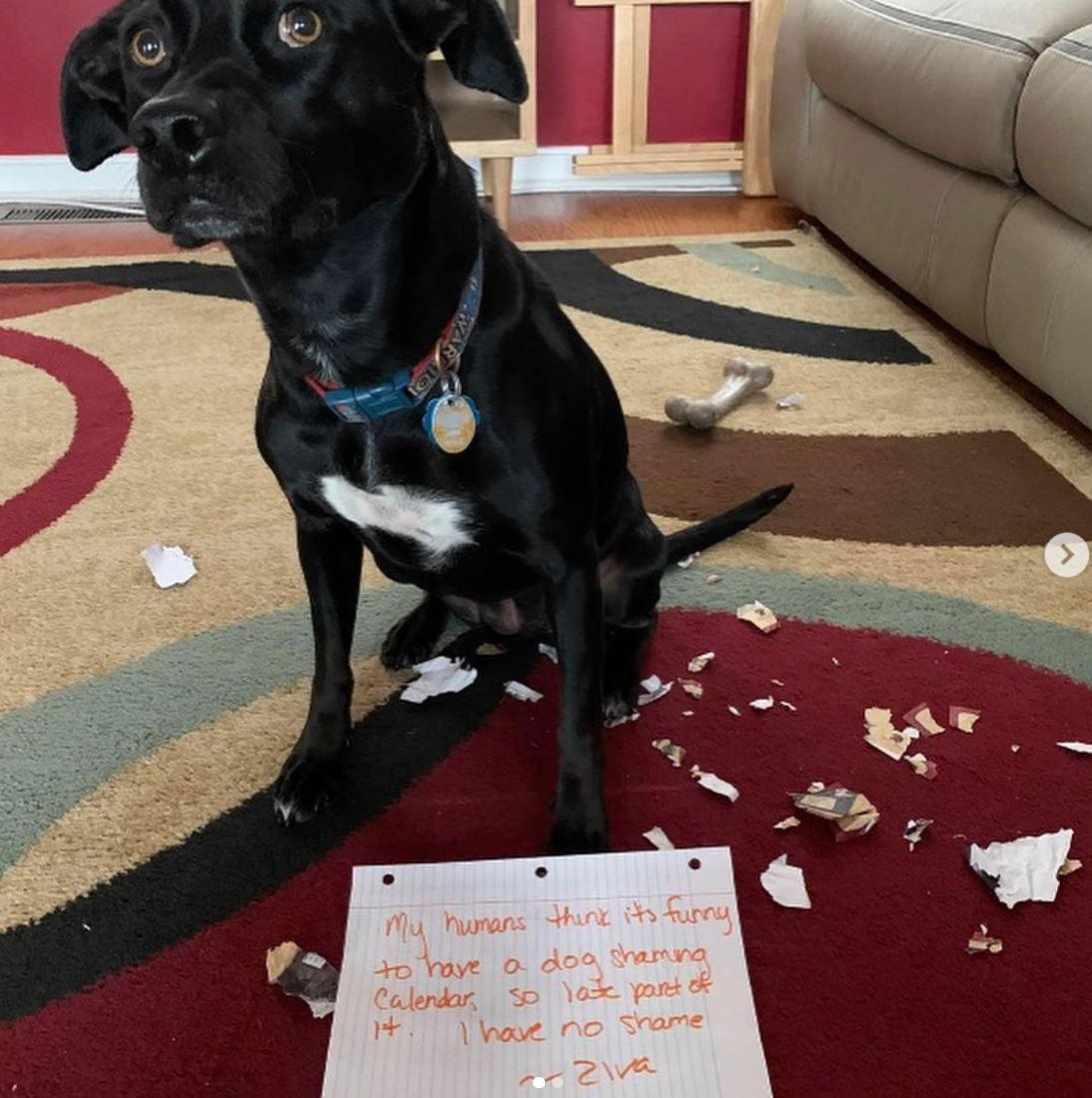 Dog has no shame