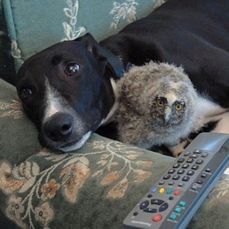 Dog and bird on couch
