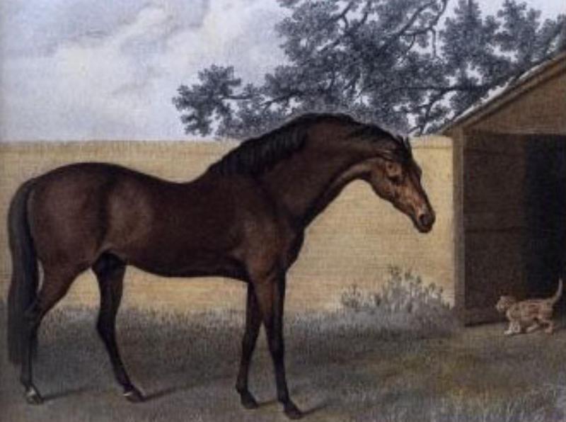 Godolphin Arabia