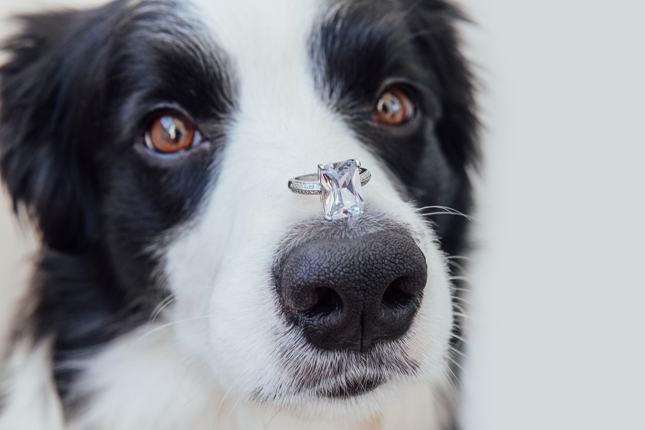 Dog with wedding ring