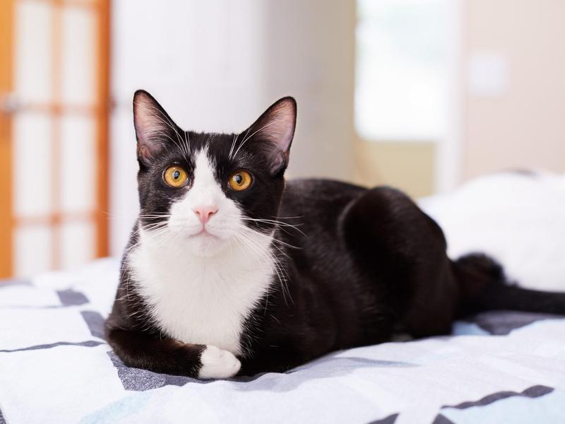 'Oreo' Cat Name