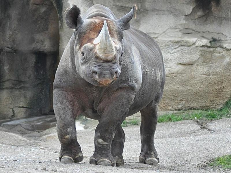Rhino Reserve
