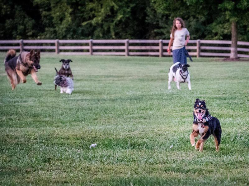 Boone County Dog Park