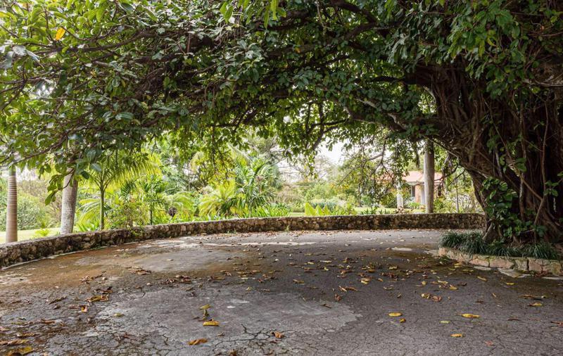 Large tree and motorcourt