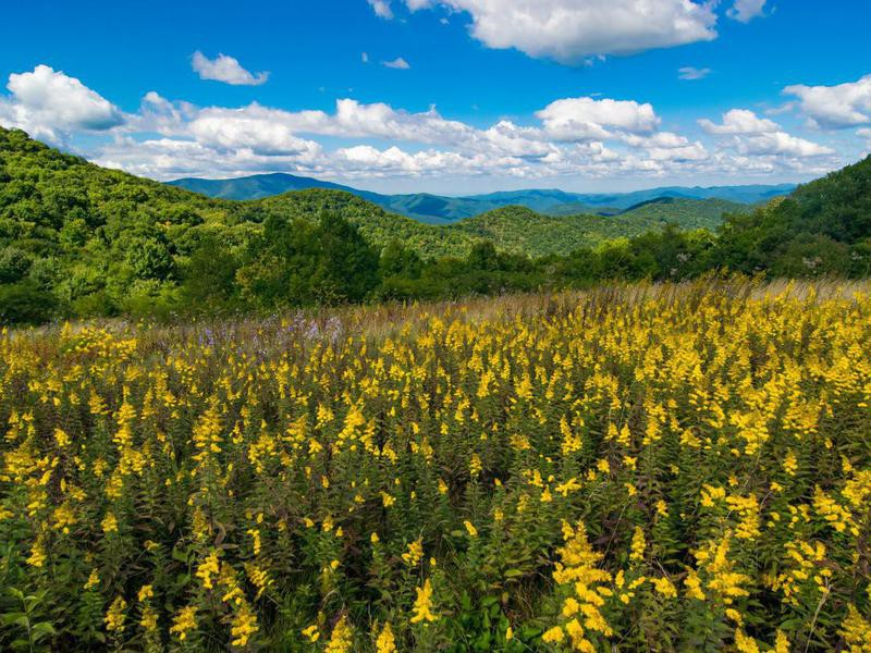 Great Smoky Mountains in the spring
