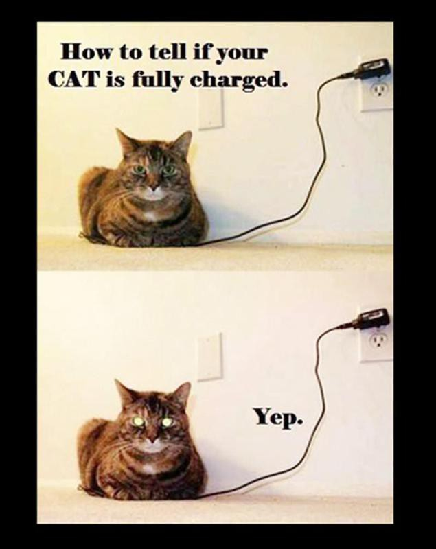 Cat on a phone charger