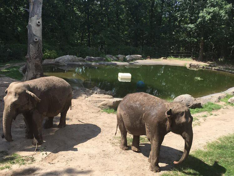 Elephants at the Bronx Zoo