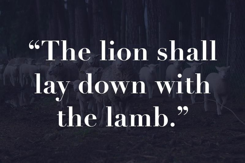 Lions and lambs