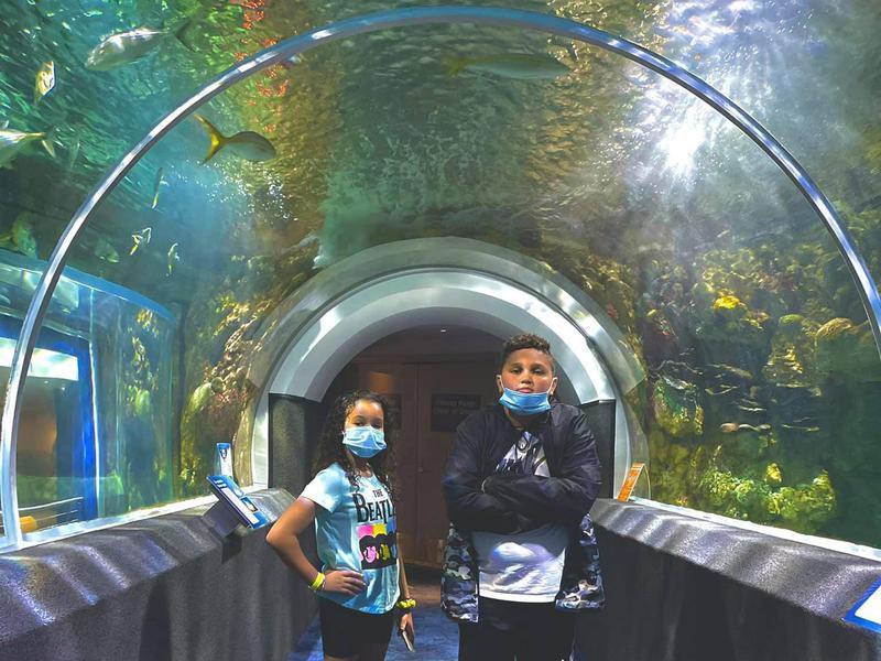 Reiman Aquarium Tunnel
