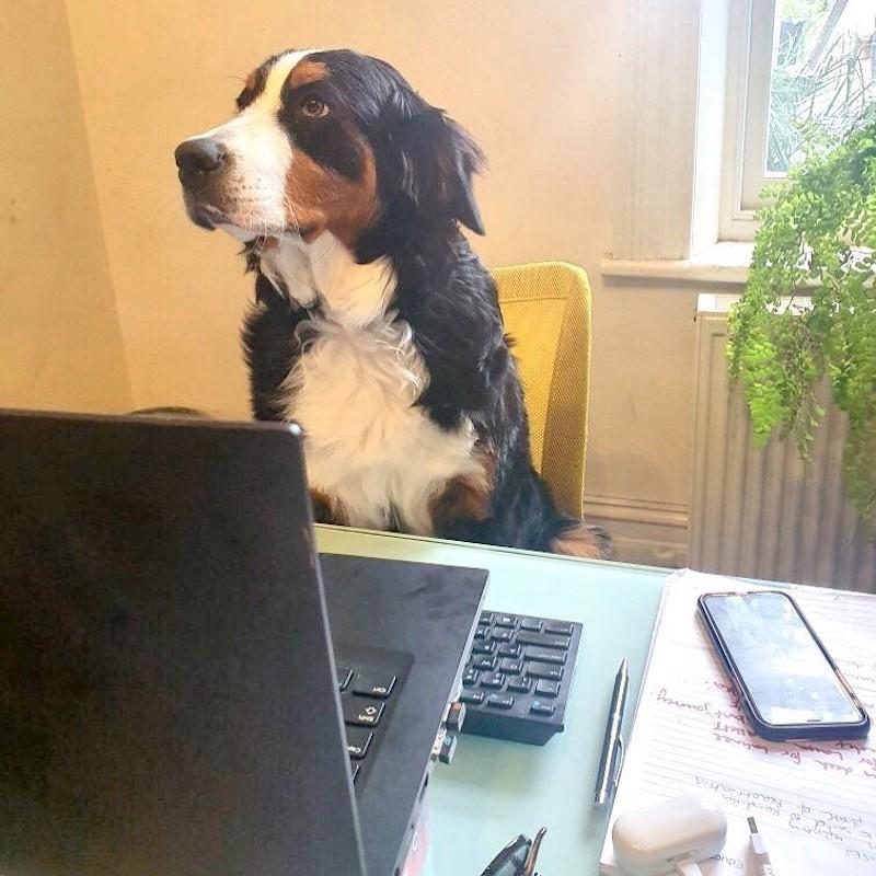 Dog at home desk